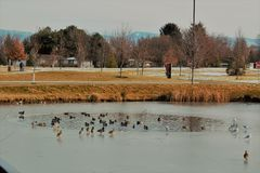 A pond within a pond at Julius M. Kleiner memorial park in Boise Idaho. On a cold winter day Royalty Free Stock Photo