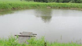 Pond a ponte e os peixes do lago na superfície da água no dia chuvoso video estoque