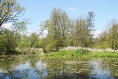 Pond in Poodri Royalty Free Stock Images