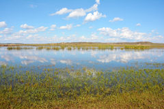 Pond in prairie Royalty Free Stock Photography