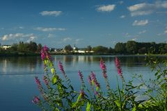 Pond with Purple loosestrife Stock Image
