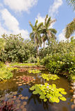 Pond in QE II Botanic Park on Grand Cayman Island Stock Photo