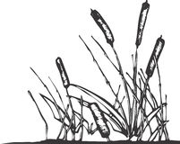Pond Reeds. A patch of reeds that might grow on the edges of a pond Stock Images