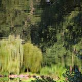 Pond reflection. Royalty Free Stock Photography