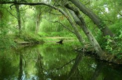 Free Pond Reflection Royalty Free Stock Images - 9171849
