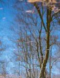 Pond reflection Royalty Free Stock Photography