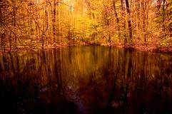 Pond Reflections. A tranquil setting near a pond in the forest stock images