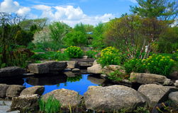 Pond Reflections. Reflections in pond of a spring day Stock Images