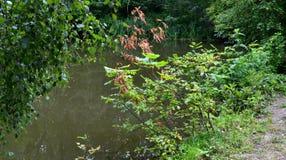 Pond in the reserve. Teberda, Karachay-Cherkessia Republic, Russia. Photo taken on: July 28 Sunday, 2013 Stock Photo