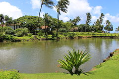 Pond. At resort in Hawaii Stock Image