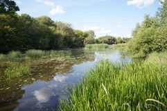 Pond Restoration. Conservation work creates a pond with healthy vegetation Stock Images