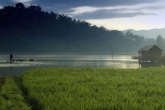 Pond and Rice Field when sunrise Royalty Free Stock Photography