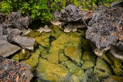 Pond with rocks. At sunny day in Coron Island, The Philippines Royalty Free Stock Image
