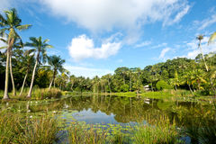 Pond Scene on Pulau Ubn, Singapore Stock Photography