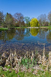 Pond Scenic Royalty Free Stock Photo
