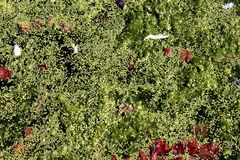 Pond Scum Surface Royalty Free Stock Photos