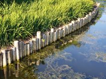 Pond shore wooden edging. A view of a wood edging of the shore stock image