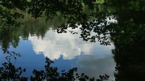 Pond stock video