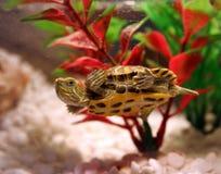 Pond Slider Royalty Free Stock Photo