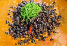 River snail red curry Stock Photography