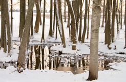 Pond in snow Stock Images