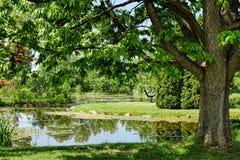 Pond sob a árvore verde cercada com grama luxúria Foto de Stock Royalty Free