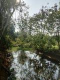 pond royalty free stock image