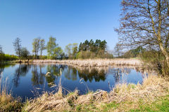 Pond in the spring countryside Royalty Free Stock Image