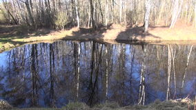 Pond in spring morning forest and reflections stock footage