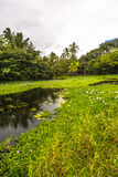 The pond of Spring Water in Big Island, Hawaii Royalty Free Stock Photos