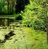 Pond in springtime 3. Pond in springtime, with trees and shrubs at the shore and reflections of the surrounding woods stock images