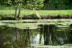 Pond in springtime Royalty Free Stock Photos