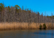 Pond in Springtime Royalty Free Stock Photo