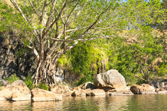Pond and strangler fig, Australia Royalty Free Stock Photos