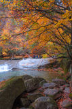 Pond and stream in golden fall forest Royalty Free Stock Image