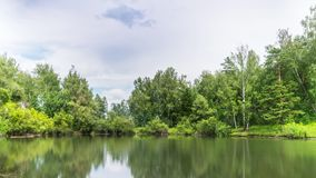 Pond in Summer Forest under Clouds. Timelapse stock footage