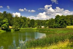 Pond in summer park Stock Image