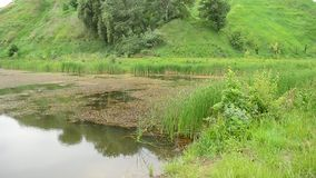 Pond in summer with trees and grass in the background stock footage