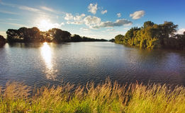 Pond with sun and forest Royalty Free Stock Photography