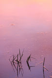 Pond at sunset Royalty Free Stock Image