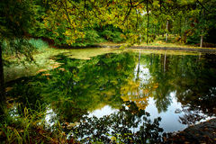 Pond. Surrounded by a green forest royalty free stock photo