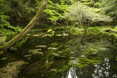 Pond surrounded by green forest. Spring water pond Yamabuki-suigen spring water surrounded by green forest in Kumamoto Royalty Free Stock Images