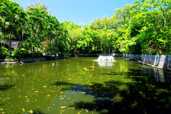 Pond surrounded by green trees Stock Photography