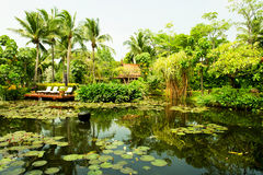 Pond surrounded by lush tropical plants Royalty Free Stock Images
