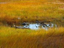 Pond in a Grassy Yellow Meadow in Maine. A pond surrounded by tall yellow and orange grasses during autumn in rural Maine outside Acadia National Park stock photos