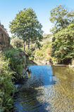 Pond surrounded by trees. Located in the Spanish province of Caceres, is a picture vertically on a sunny day Stock Images