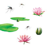 Pond swamp plants, insects, water lily flower and Stock Images