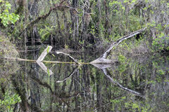 Pond Swamp View At Slough Preserve. Picture taken at Slough Preserve, Fort Myers - FL, USA Stock Photo