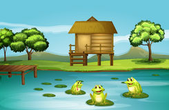 A pond with three playful frogs. Illustration of a pond with three playful frogs Royalty Free Stock Photos