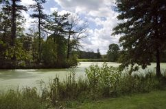 Pond. A tree lined pond with green algae on a summer day Stock Image